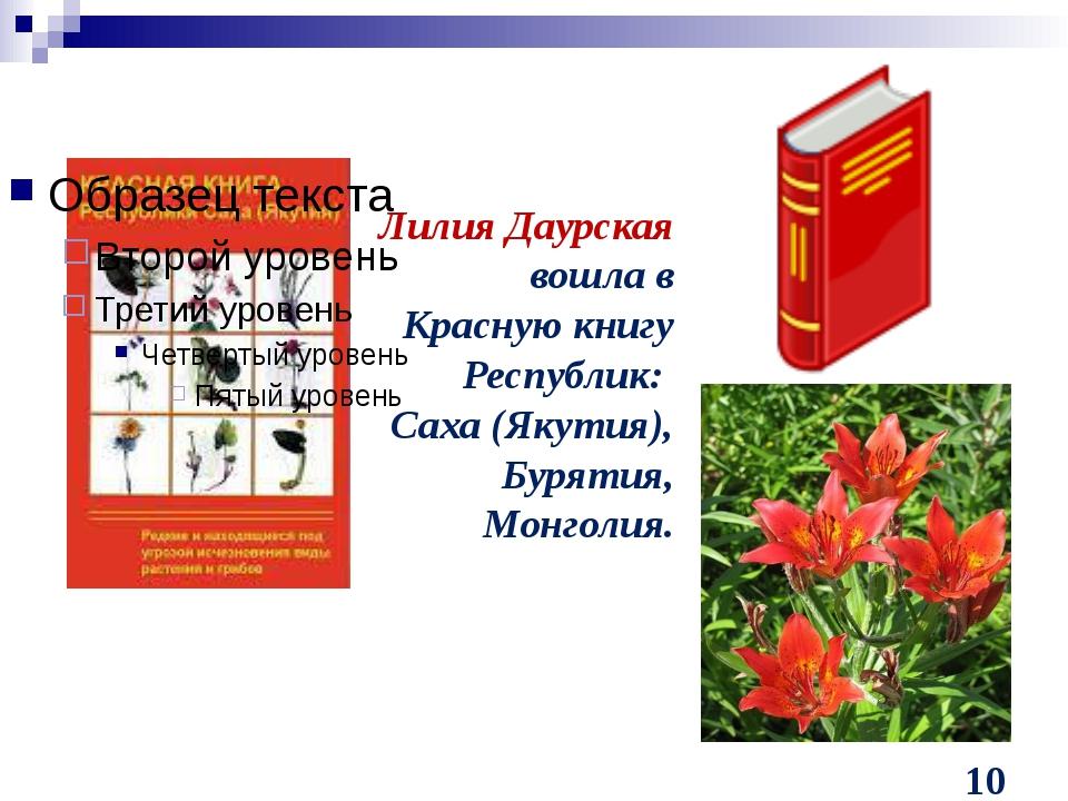 Лилия Даурская вошла в Красную книгу Республик: Саха (Якутия), Бурятия, Монг...