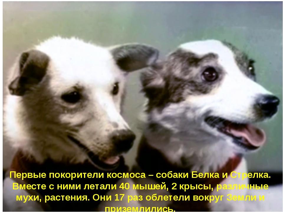 Первые покорители космоса – собаки Белка и Стрелка. Вместе с ними летали 40...
