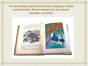 Это настоящая книга-мечта! Книга поражает своим великолепием. Иллюстрации ест