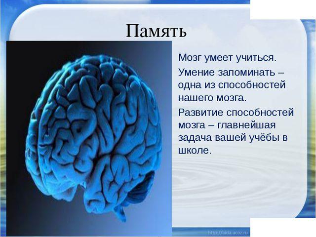Память Мозг умеет учиться. Умение запоминать – одна из способностей нашего мо...