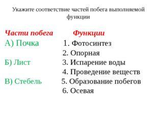 Части побега Функции А) Почка 1. Фотосинтез 2. Опорная Б) Лист 3. Испарение в