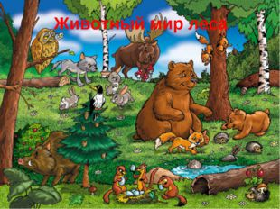 Животный мир леса