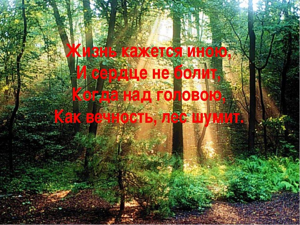 Жизнь кажется иною, И сердце не болит, Когда над головою, Как вечность, лес ш...