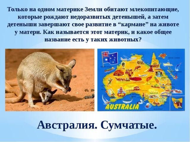 Только на одном материке Земли обитают млекопитающие, которые рождают недораз...