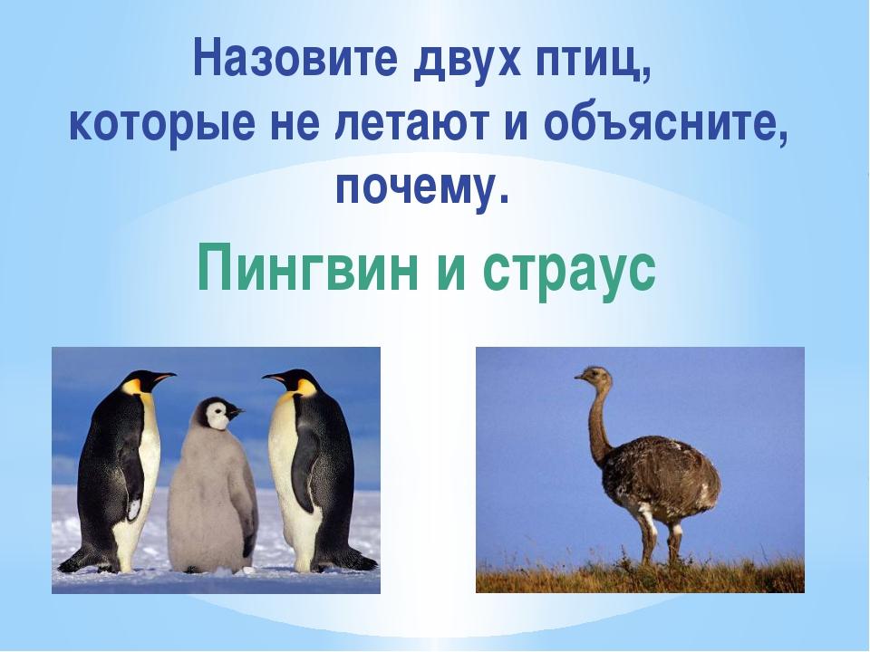 Назовите двух птиц, которые не летают и объясните, почему. Пингвин и страус