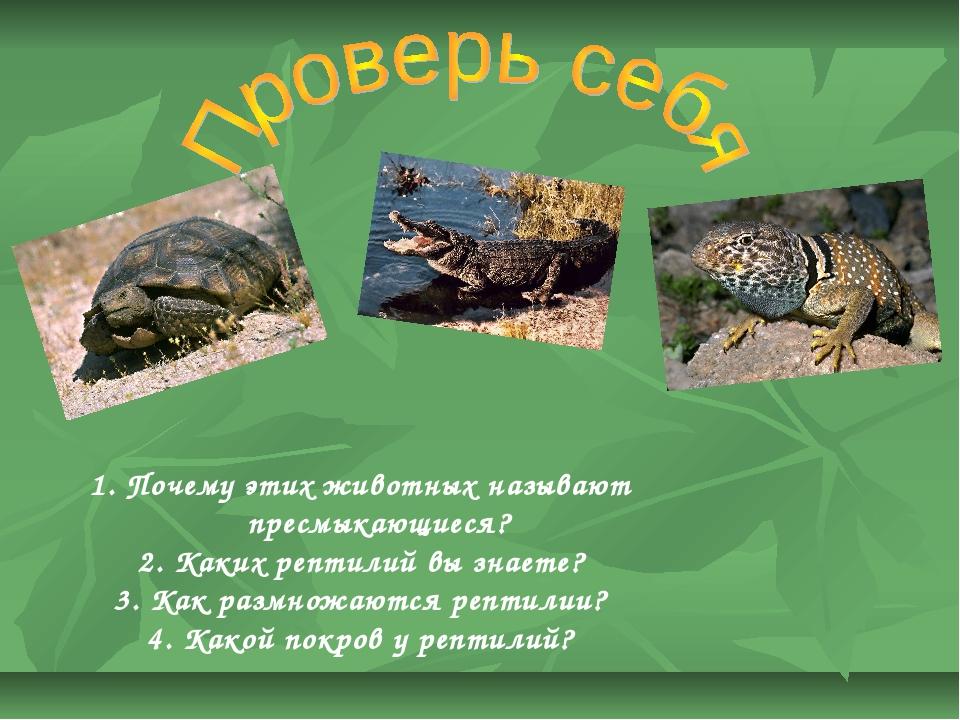 Почему этих животных называют пресмыкающиеся? Каких рептилий вы знаете? Как...