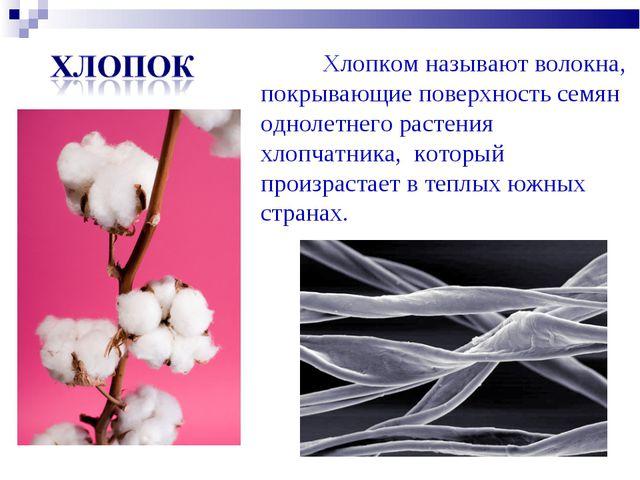 Хлопком называют волокна, покрывающие поверхность семян однолетнего растения...