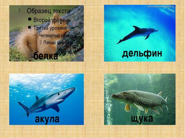 белка дельфин акула щука