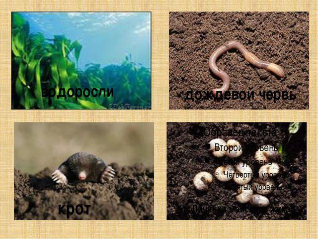водоросли дождевой червь крот Личинки майского жука