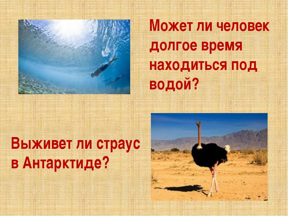 Может ли человек долгое время находиться под водой? Выживет ли страус в Анта...