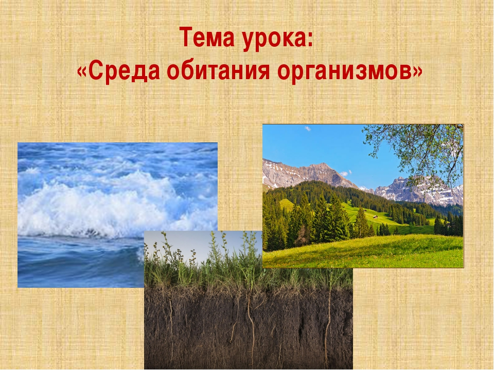 Тема урока: «Среда обитания организмов»