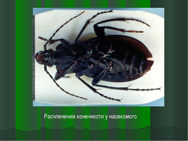 Расчленение конечности у насекомого