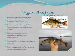 Окунь. АлыҺар. Красиво и ярко окрашенная рыба. Длина до 55 см, вес до 2 кг. Р