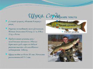 Щука. Сордоӊ. Сильный хищник, обитает в озерах и реках. Окраска зеленоватая,