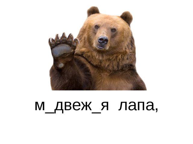 м_двеж_я лапа,
