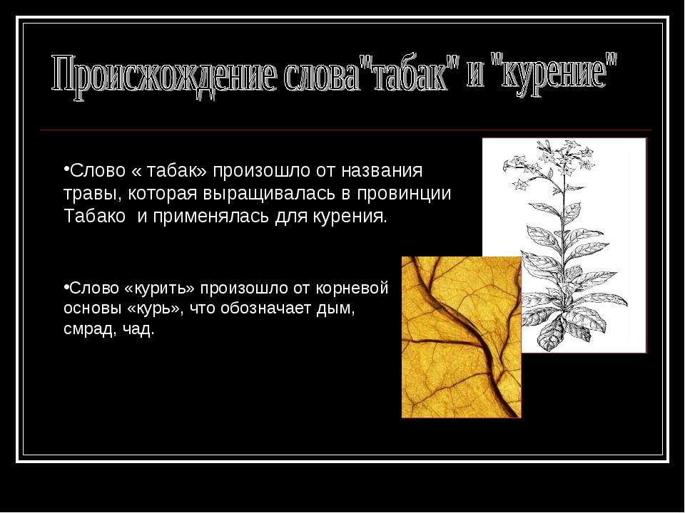 Слово « табак» произошло от названия травы, которая выращивалась в провинции...