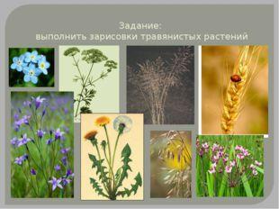 Задание: выполнить зарисовки травянистых растений