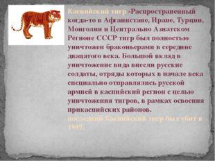 Каспийский тигр -Распространенный когда-то в Афганистане, Иране, Турции, Монг