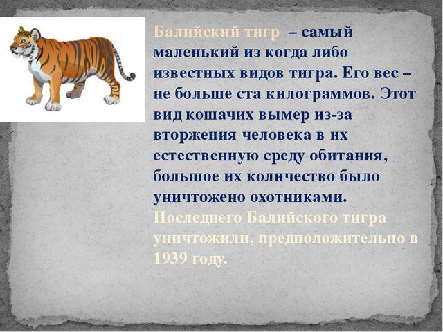 Балийский тигр – самый маленький из когда либо известных видов тигра. Его вес...