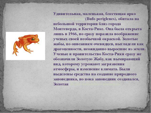 Удивительная, маленькая, блестящая ярко оранжевая жаба (Bufo periglenes), оби...