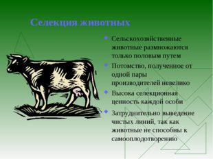 Селекция животных Сельскохозяйственные животные размножаются только половым п