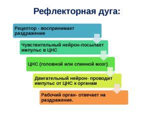Рефлекторная дуга: