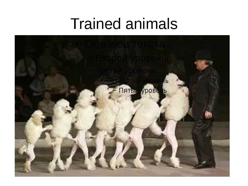 Trained animals