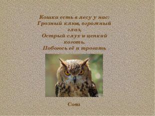 Кошка есть в лесу у нас: Грозный клюв, огромный глаз, Острый слух и цепкий ко