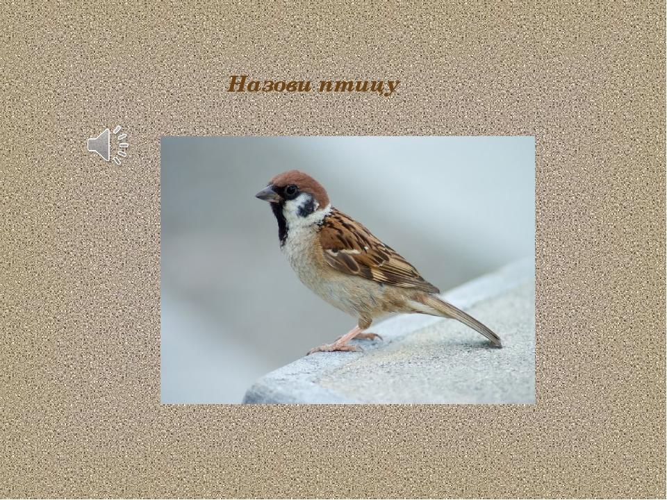 Назови птицу