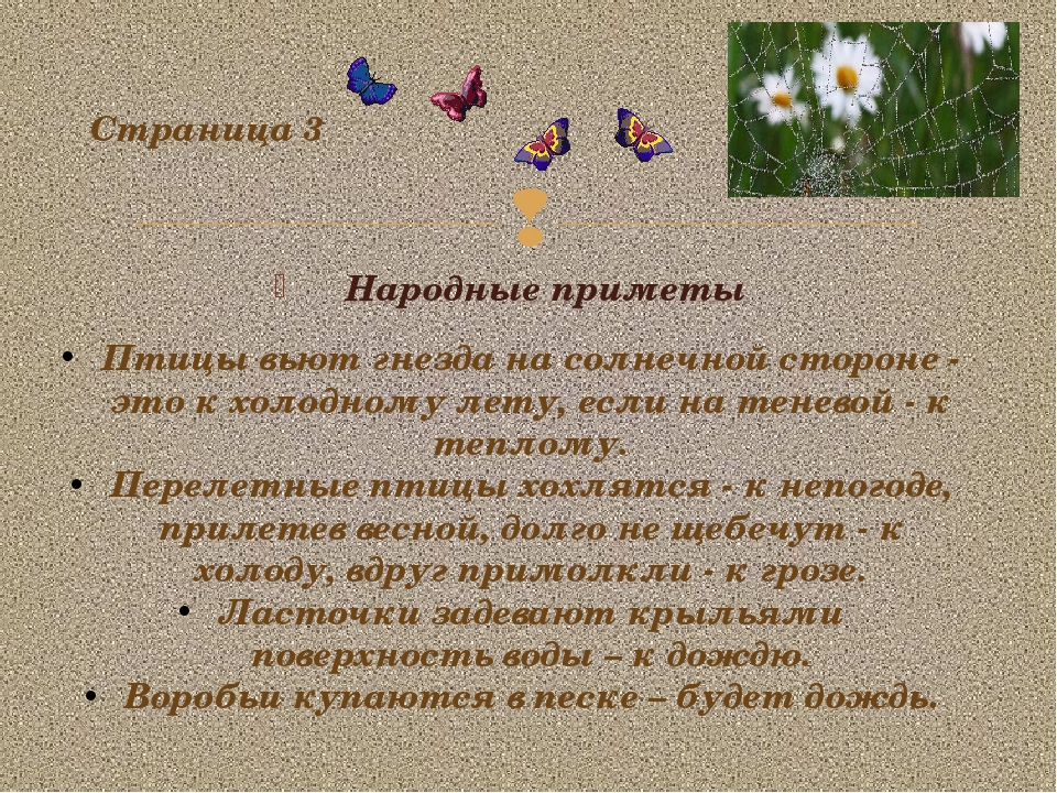 Народные приметы Страница 3 Птицы вьют гнезда на солнечной стороне - это к хо...
