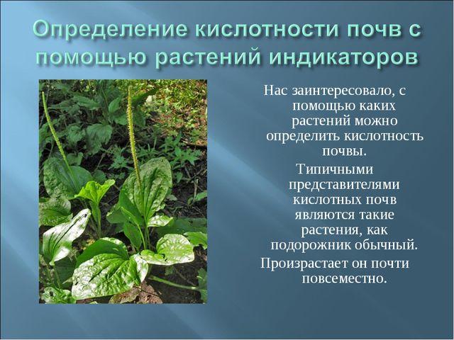 Нас заинтересовало, с помощью каких растений можно определить кислотность поч...