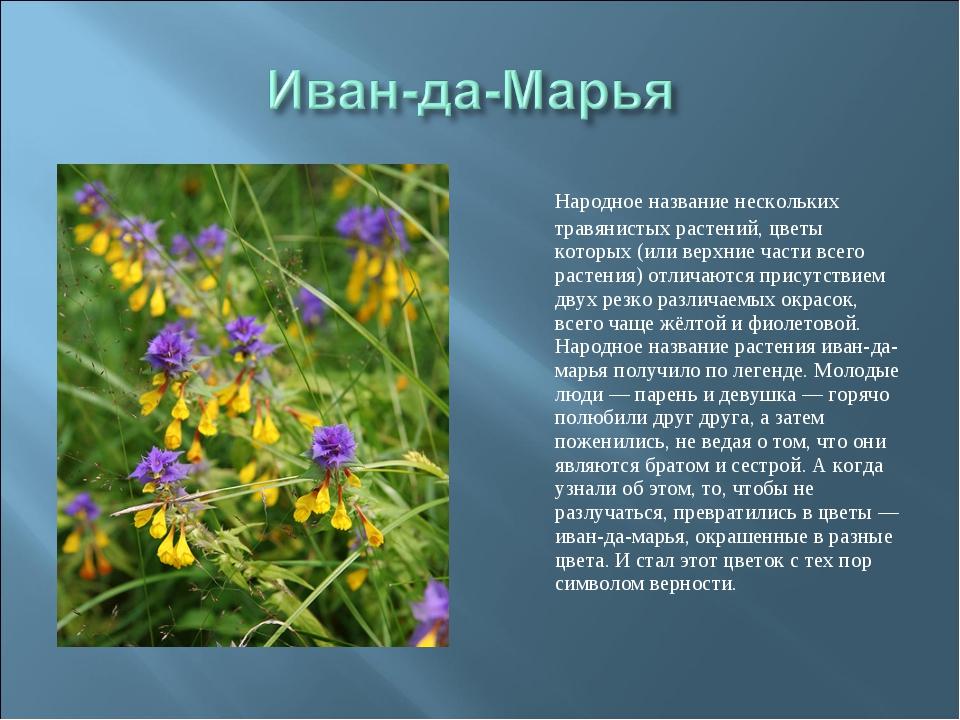 Народное название нескольких травянистых растений, цветы которых (или верхни...