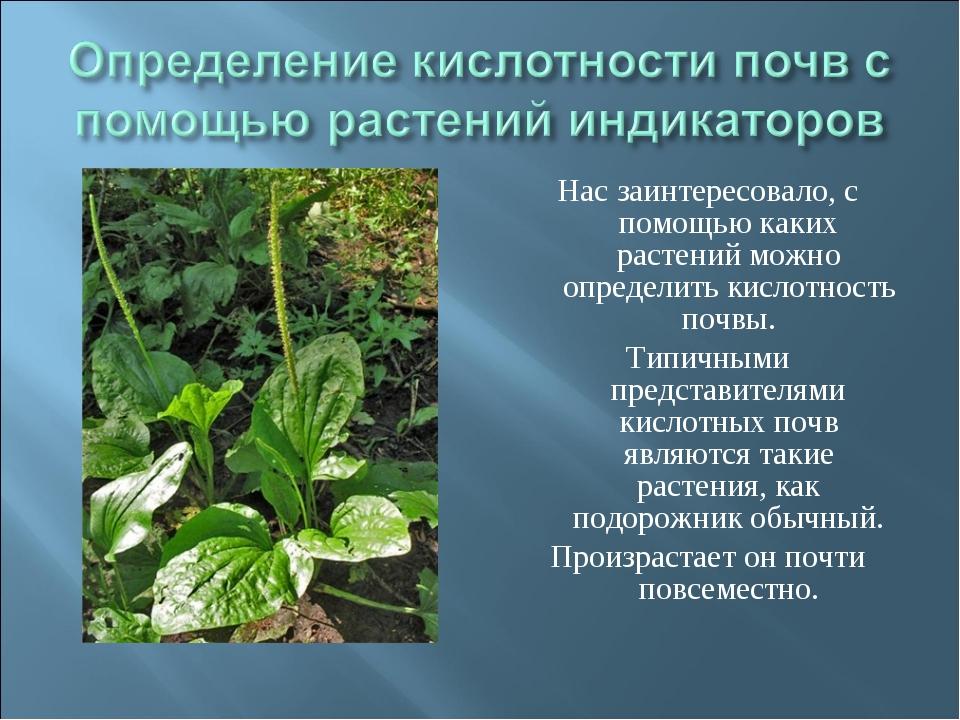 растения для кислых почв сойдёте