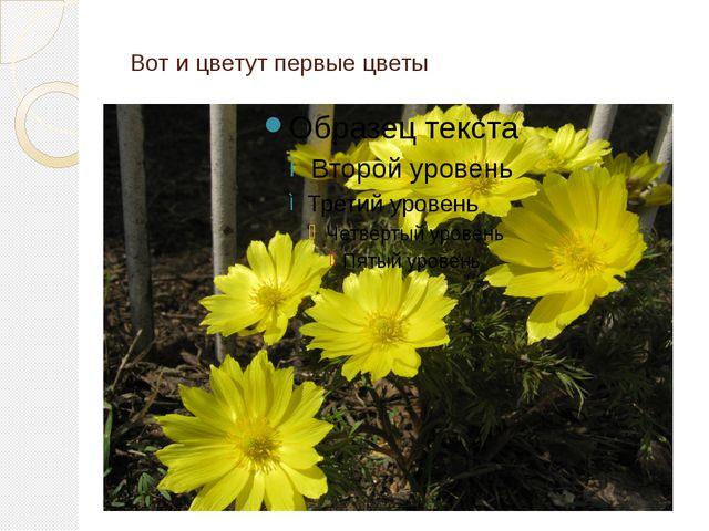 Вот и цветут первые цветы