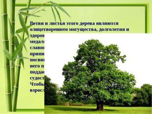 Ветви и листья этого дерева являются олицетворением могущества, долголетия и