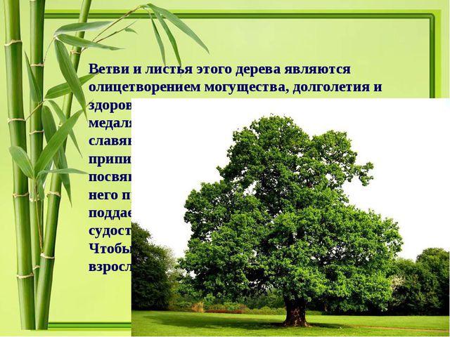 Ветви и листья этого дерева являются олицетворением могущества, долголетия и...