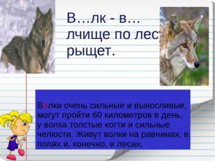 Волки очень сильные и выносливые, могут пройти 60 километров в день, у волка