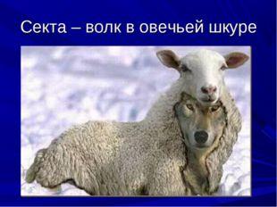 Секта – волк в овечьей шкуре