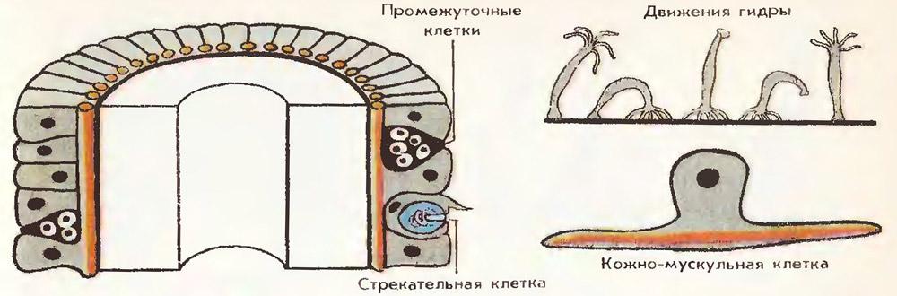 http://fs1.uclg.ru/images/52ff6e86254c5551.jpg