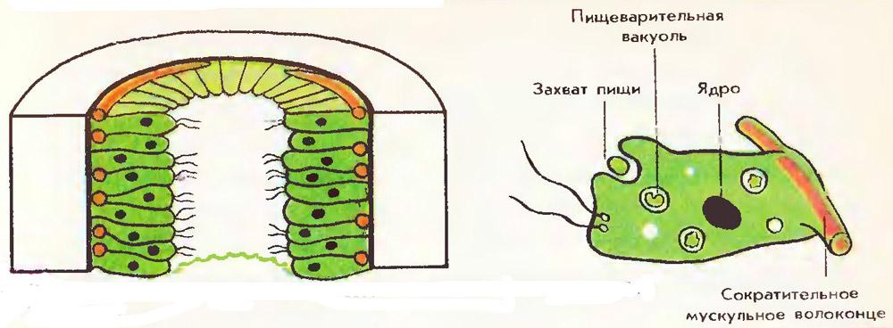 http://fs1.uclg.ru/images/52ff6ef0316f49e3.jpg