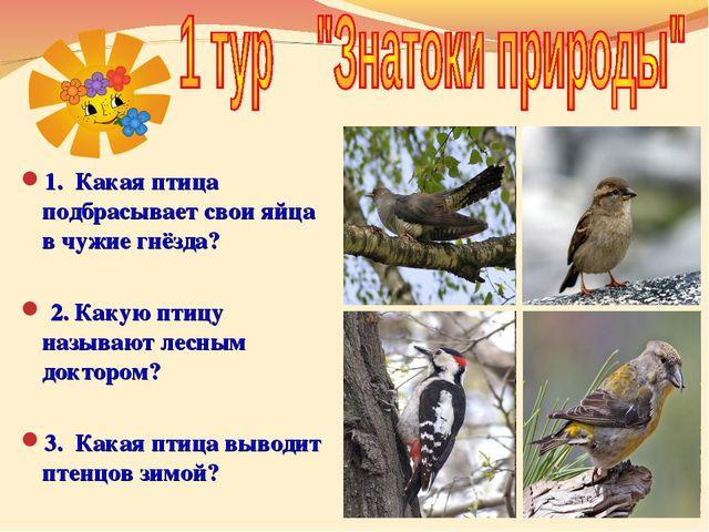1. Какая птица подбрасывает свои яйца в чужие гнёзда? 2. Какую птицу называю...