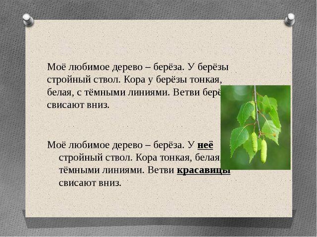 Моё любимое дерево – берёза. У берёзы стройный ствол. Кора у берёзы тонкая, б...