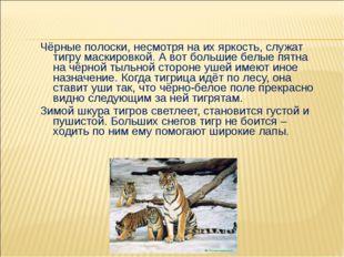 Чёрные полоски, несмотря на их яркость, служат тигру маскировкой. А вот боль