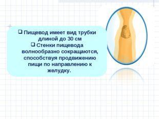 Пищевод имеет вид трубки длиной до 30 см Стенки пищевода волнообразно сокраща