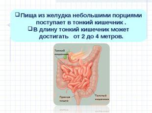 Пища из желудка небольшими порциями поступает в тонкий кишечник . В длину тон