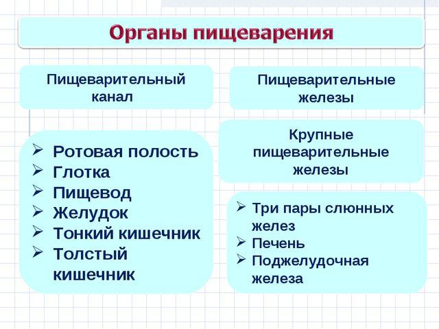 Пищеварительный канал Пищеварительные железы Крупные пищеварительные железы Р...