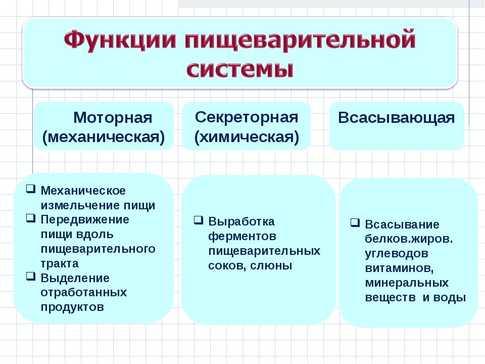 Моторная (механическая) Секреторная (химическая) Всасывающая Механическое из...