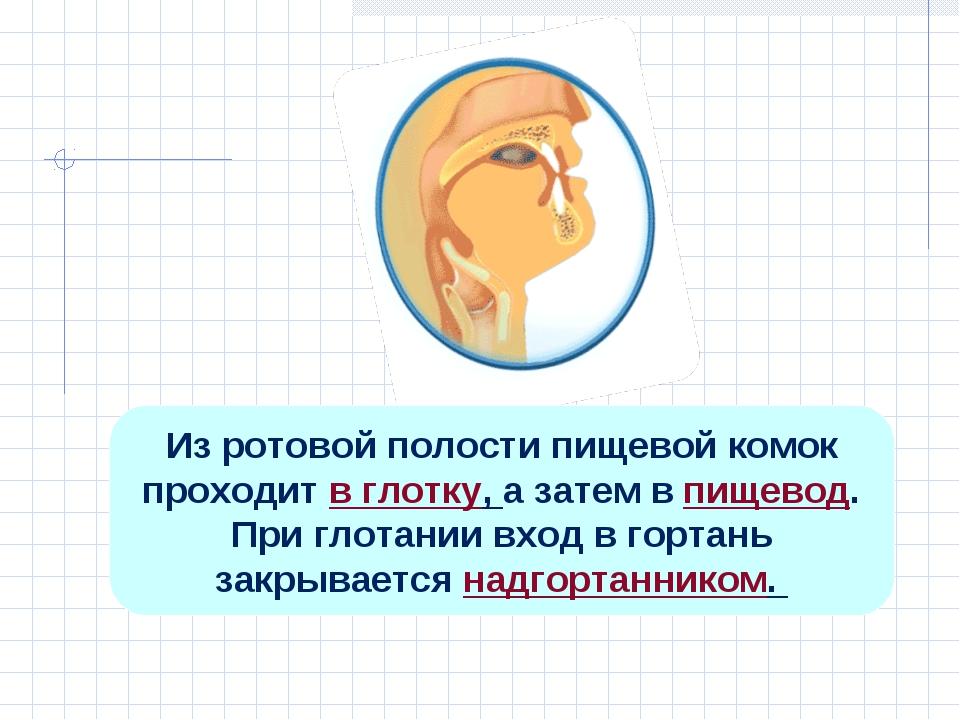 Из ротовой полости пищевой комок проходит в глотку, а затем в пищевод. При гл...