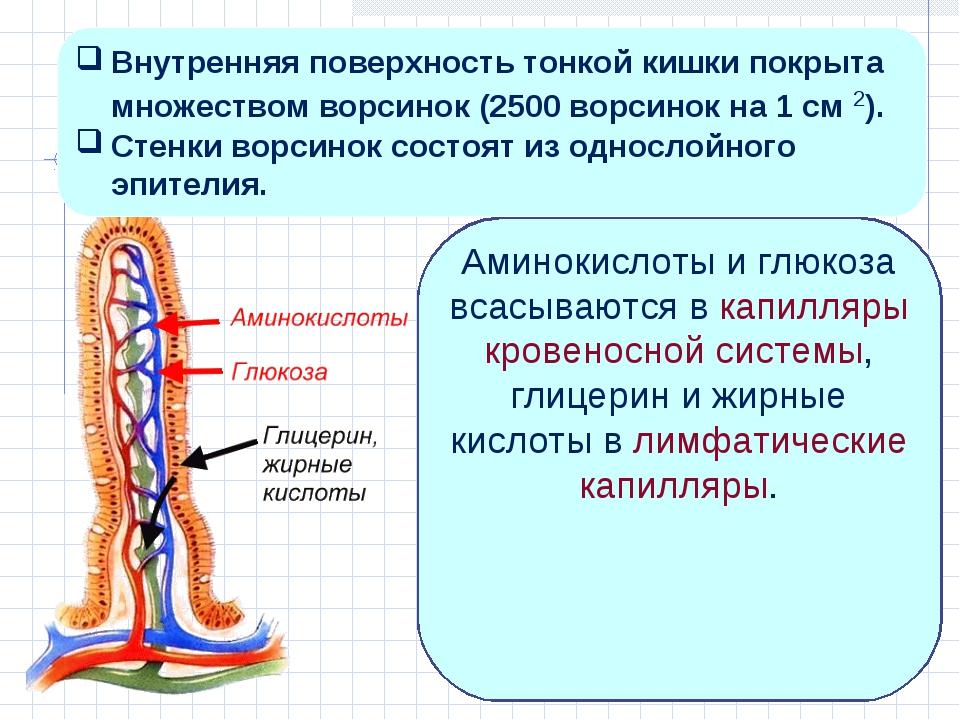 Аминокислоты и глюкоза всасываются в капилляры кровеносной системы, глицерин...
