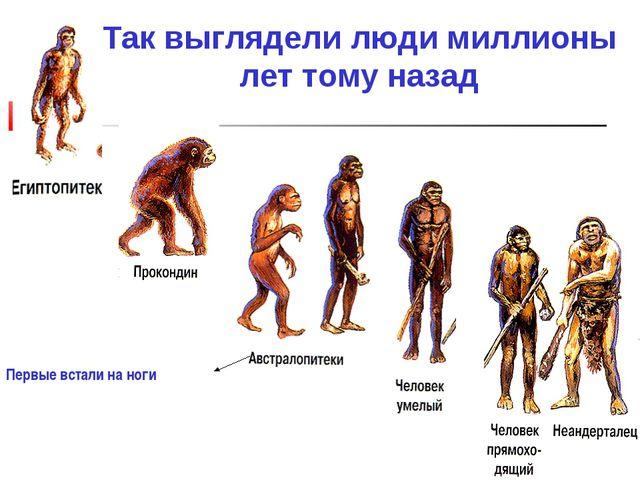 Так выглядели люди миллионы лет тому назад Первые встали на ноги